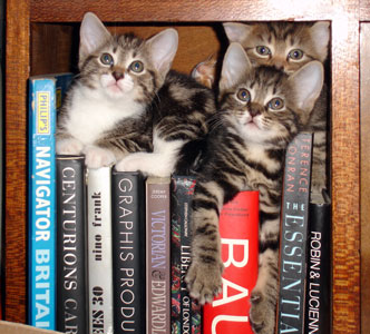 Bookish Kittens